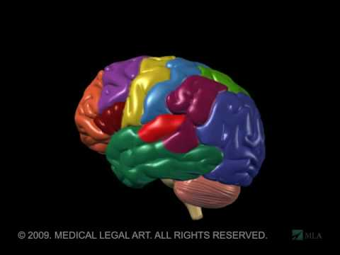 Brain Anatomy And Functions Nucleus Health Youtube