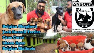 ക്വാളിറ്റി ഡോഗ്സിനെ വാങ്ങാൻ നല്ലൊരു കെന്നൽ|Belgian Shepherd|Malinois|Cane Corso|Dogs Malayalam