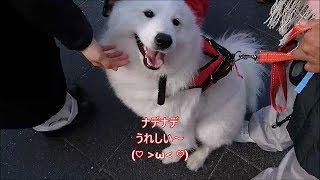 天王寺公園、てんしばで開催された2018年中国春節祭in大阪天王寺に遊び...