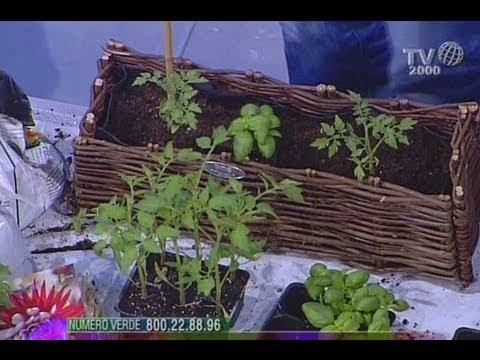 Come creare un piccolo orto sul balcone di casa - YouTube