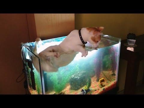 Cats Vs. Fish Tanks