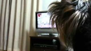 テレビの琉球犬に吠えてます。