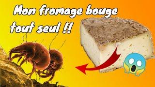Des Acariens dans mon Fromage !!! 😱😱  [ Les Cirons ]
