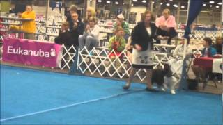 Sat 03/17/12 Evansville Kennel Club Best In Show