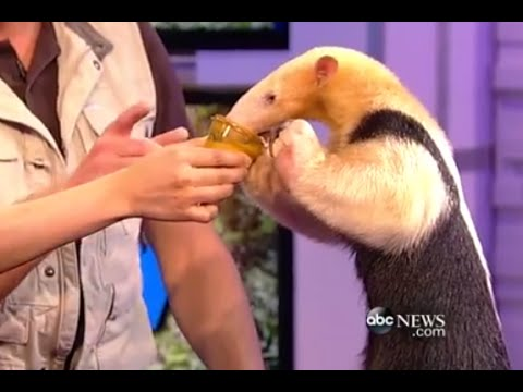 Snakes and Skunks Go Wild on WNN Set | CUTE ANIMALS (Episode 16)
