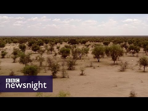The Great Green Wall of Africa: Will it help fight climate change? - BBC Newsnight