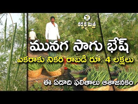 మునగ సాగుతో మీసం మెలేసిన రైతు    Success Story of Drumstick/Moringa Farming    Karshaka Mitra