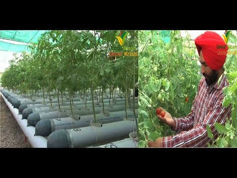 Best Hydroponic system in nominal cost | Made by Young Punjabi farmer