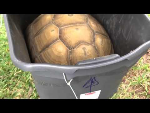Surprise Reptile Unboxing