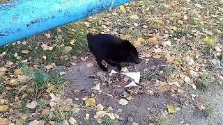 Бездомная кошка не в восторге от сухого корма Вискас