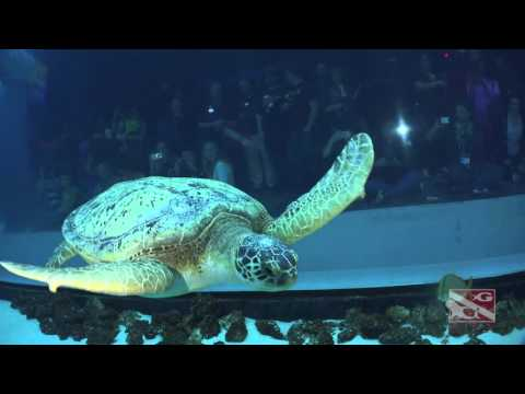 Georgia Aquarium SCUBA Dive 3/5/2016