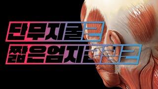 [해부학 - 근육학] 손근육(hand muscles) - 짧은엄지굽힘근(단무지굴근, flexor pollic…