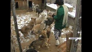 Жительница Енисейска взяла на передержку 75 бездомных котов и собак
