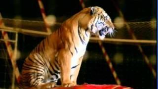 1 - Die Artisten in der Zirkuskuppel: ratlos - 1968 - Kluge
