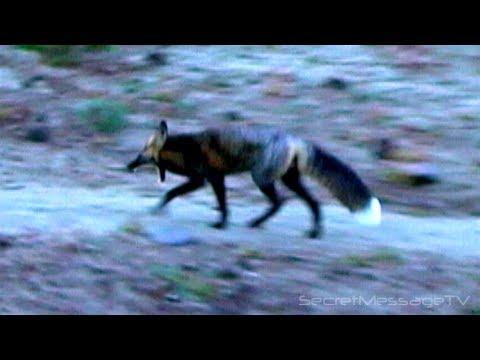 Silver Fox and Portal Phenomena on Mount Adams