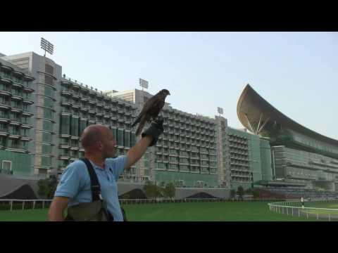 Bird Pest Control Dubai