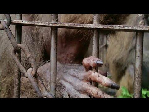 Rescate de animales de circo en México