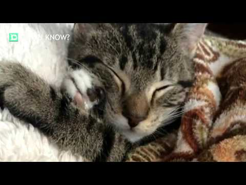 This Kitten Called Angel Had A Little Surprise For Her Potential Rescuers!