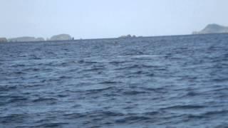 外地島の東側に母子とエスコート!