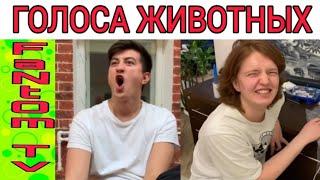 Подборка! | Новые вайны инстаграм 2019 |Лучшие вайны | Сека | Денис Салманов | Платон