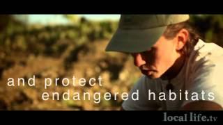 Salmon Safe-Save Wild Salmon