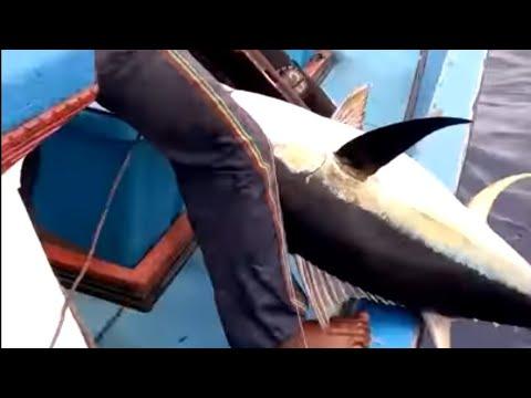 Mancing ikan Tuna, bersama pawang lahu