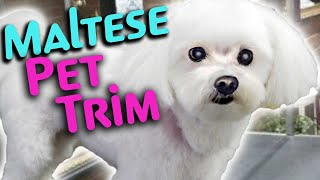 HOW to GROOM a MALTESE PET TRIM Step by Step
