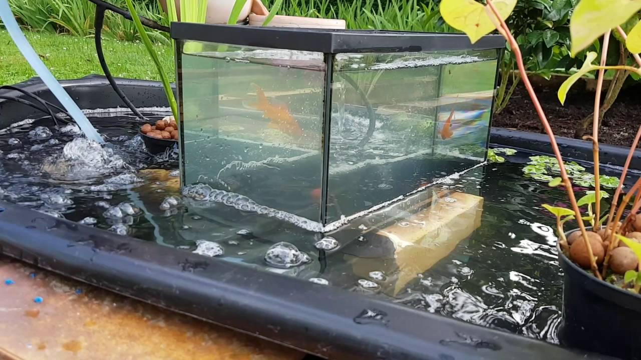 les poissons vont et viennent du bassin a l aquarium