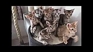 The Video Out - cool cats / Ржачные кошки №.1