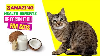 3 AMAZING  Health Benefits Of Coconut Oil For Cats