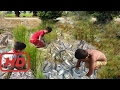 Nevjerojatna Trojica Ribolov - Uhvatiti Puno Riba Khmer - Kako Uhvatiti Ribu Rukom U Kambodži