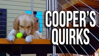 Crazy Golden Retriever Habits (Super Cooper Sunday #91)