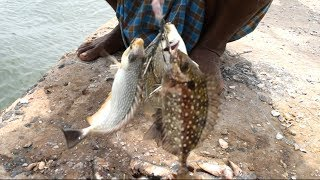 Never Seen Before this Kind of FISHING | Ora fish | Handline Fishing