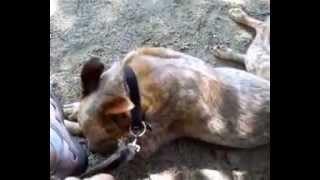 My Hubby's Dog Thumbnail