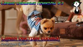 Самые смешные приколы #3 Самая быстрая собака! Шутка. Хохма.