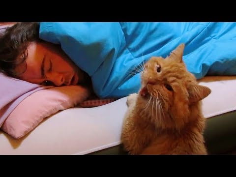 Skip Kelly - Check Out These Crazy Cat Alarm Clocks (Hysterical)