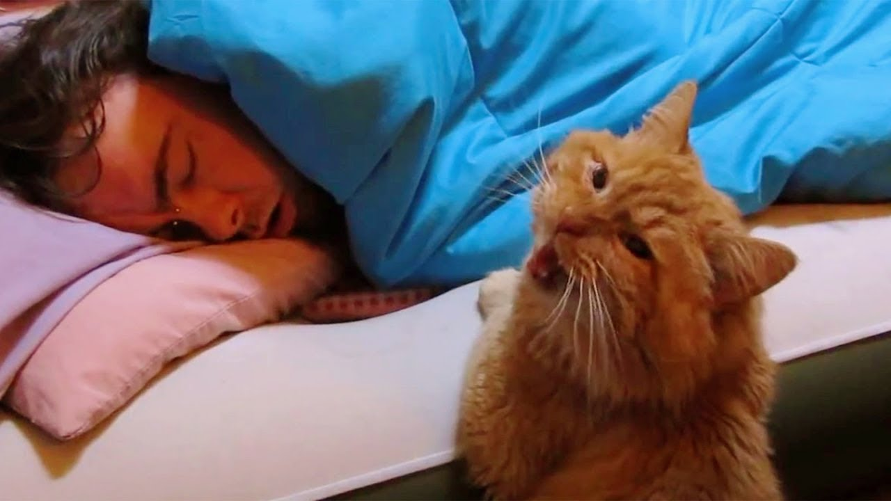 Funny Cats Waking up Owner | Cat Alarm Clocks | Top Cats Video Compilation
