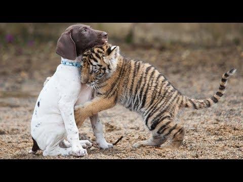 Бесплатно без регистрации приколы телефону 2019 - Смешные животные МатроскинТВ