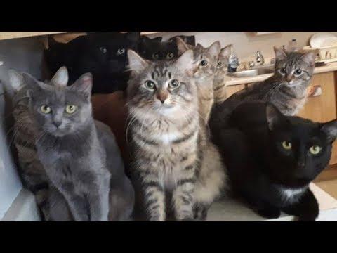 Кошки почувствовали, что хозяйка заболела. Все пятеро cразу же пришли к ней на помощь!