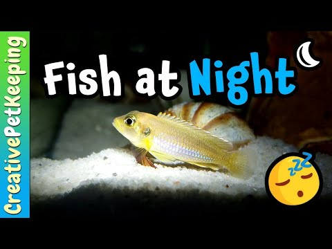 What My Fish Do At NIGHT 🌜 How Do Fish Sleep