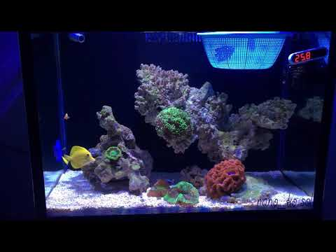 Cambodia 45g Reef/fish Tank.