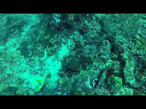Phi Phi Island - Boat Travel from Koh Samui - The Beach Resort