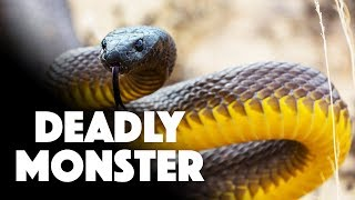 THE MOST VENOMOUS SNAKE In The World | You have to see how potent this snake's venom is