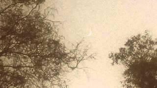 Cenine's Dream - Desolated Senses (2014)