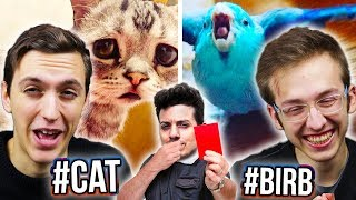 GUERRA CIVILE DI MEME! CATTI VS BIRBI! - Meme reaction w/Leo e Phanto