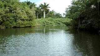 Река в джунглях Кубы! Рай для рыбаков!.
