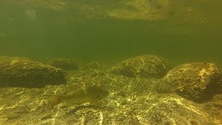 Smallmouth Bass Fishing on Beds