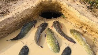 Building Fish Pool Trap With Countryside Cooking Recipe and Eating Quietly | Primitive Eating