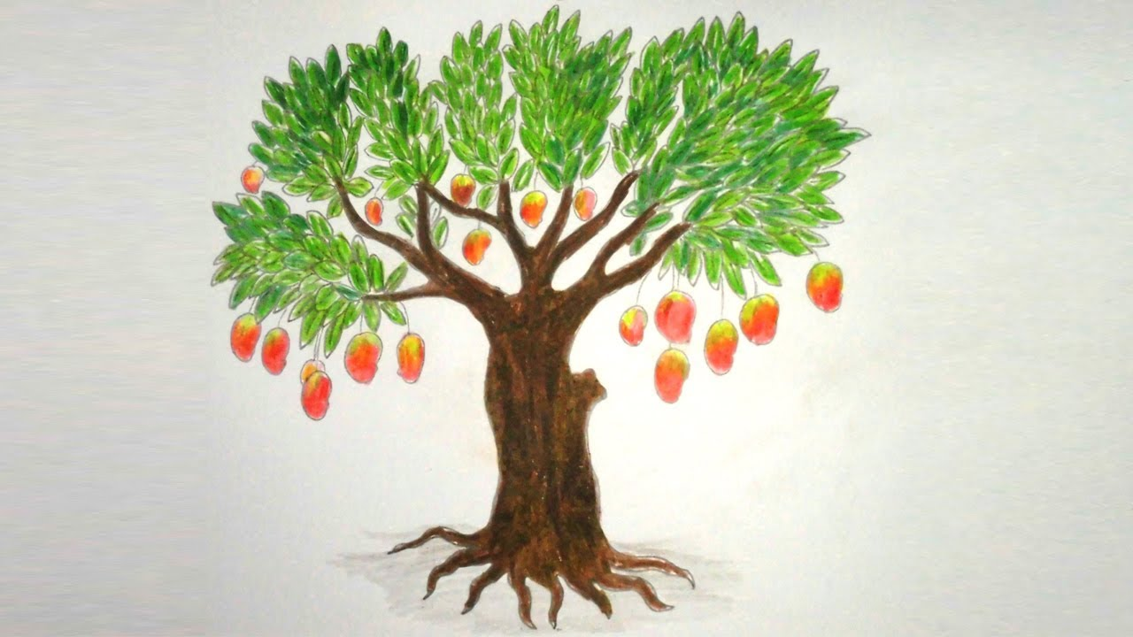 Mango Tree Pictures For Coloring
