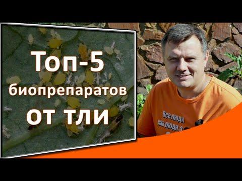 Топ-5 биопрепараты от тли:  огород под защитой
